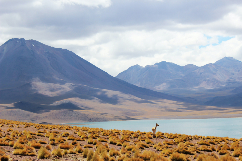 Nature Reserve in Chile